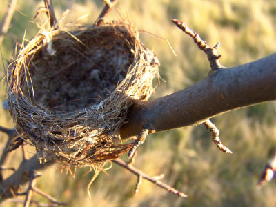 Tips for empty nest syndrome!