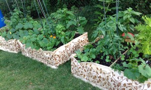 A raised bed for healthy organic produce