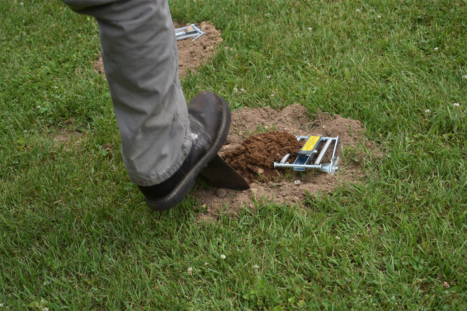 Moles digging up your yard?