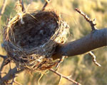 Is empty nest real?