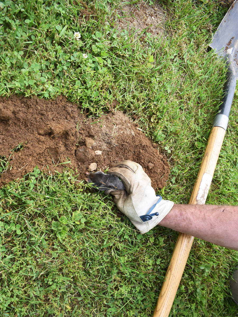Moles digging up your yard and mole traps not working?